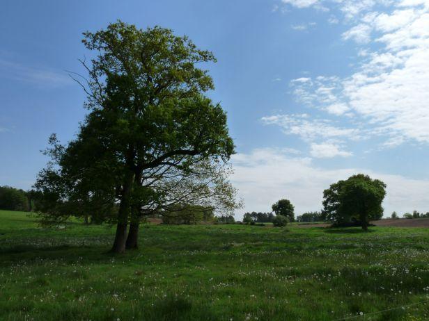 Les paysages de l'Oust à Brocéliande communauté